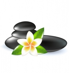 Frangipani with leaves and stones vector