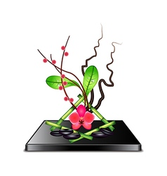 Ikebana isolated on white vector image vector image