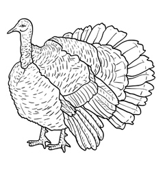 Sketch black turkey on a white background vector