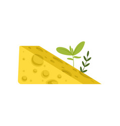 Triangular piece of swiss cheese with green herbs vector