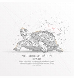 Turtle low poly wire frame on white background vector