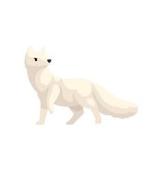 White polar fox arctic animal vector