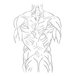 torso muscles back vector image vector image