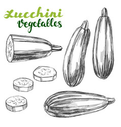 zucchini vegetable set hand drawn vector image vector image
