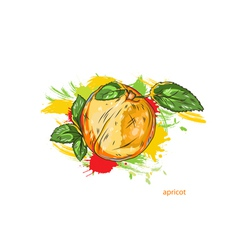 apricot with colorful splashes vector image