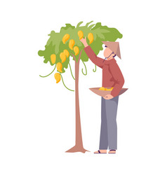 Asian male farmer in conical hat picking up fruits vector