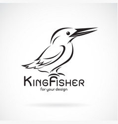 kingfishers birdalcedo atthis on white background vector image