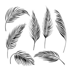 Palm tree leaves collection black line silhouette vector