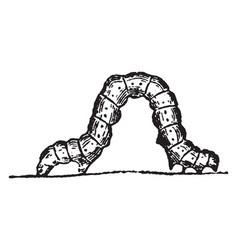 Spanner caterpillar vintage vector