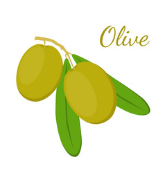 olive branch olives cosmetics medical plant vector image