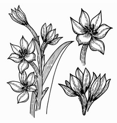 set hand drawn flowers and plants image vector image