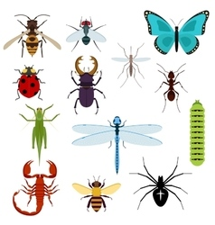 Cartoon isolated colorful insects set vector image vector image