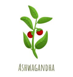 Ashwagandha plant icon cartoon style vector