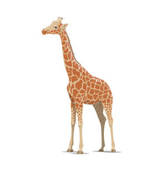 Giraffe wild animal isolated icon vector