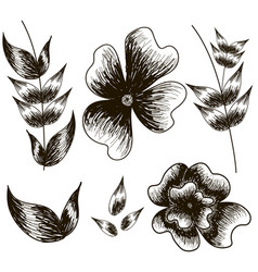 set flowers and plants to decorate hand drawn vector image
