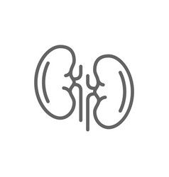 simple kidneys line icon symbol and sign vector image vector image