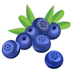 Blueberry berries and leaves vector