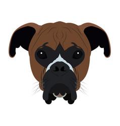 Isolated boxer avatar vector