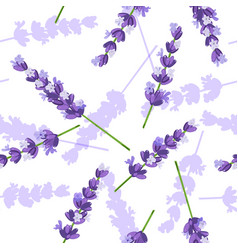 Lavender flowers seamless pattern vector