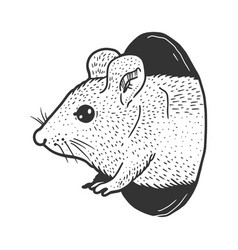 Mouse peeps out hole sketch vector