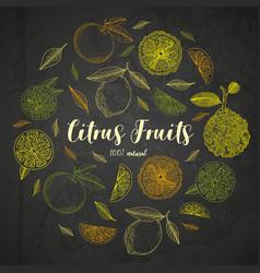 Organic citrus fruit banners engraving sketch vector