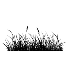 Silhouette of grass vector image
