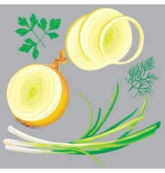 spring onion parsley dill greens vector image