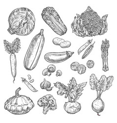vegetables organic isolated sketch icons vector image