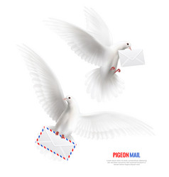 White pigeons set vector