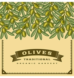 Retro olives harvest card vector image vector image