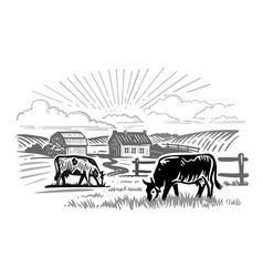 cows chewing grass on background farm vector image