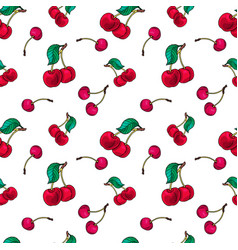 Red cuty fresh cherry fruit on white background vector