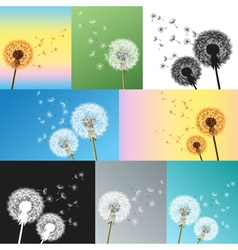 Set of dandelions blowing seeds vector image