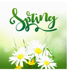 Spring time on background with spring flowers vector