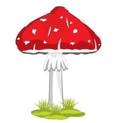 Mushroom fly agaric vector image vector image