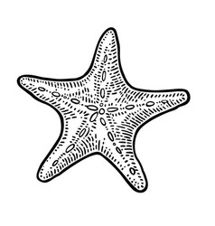 sea star isolated on white background vintage vector image vector image