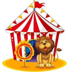 A lion beside a fire hoop at the circus vector image