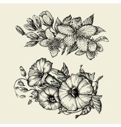 Flower Hand drawn sketch bindweed tutsan vector image vector image