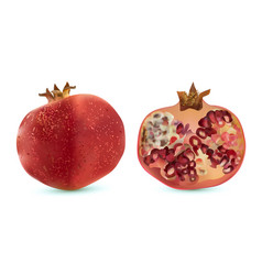 3d realistic pomegranate tropical fruit vector image