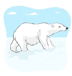 Big polar bear in arctic tundra vector