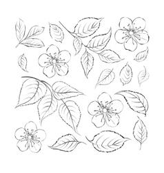collection sakura flowers set vector image