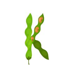 k veggie vegetable english alphabet letter made vector image