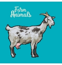 Ketch of a goat with horns and udder vector