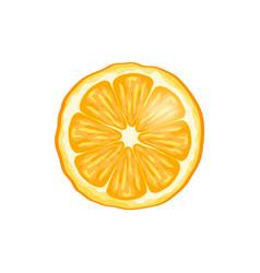 orange fruit slice closeup vector image