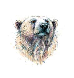 portrait a polar bear head from a splash vector image