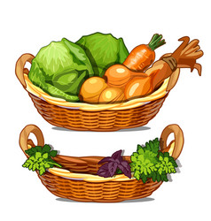 two baskets with herbs onions carrots cabbage vector image