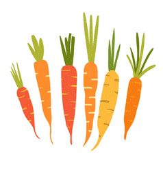 carrot in flat style and isolated on white vector image