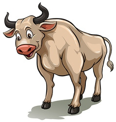 One male cow vector