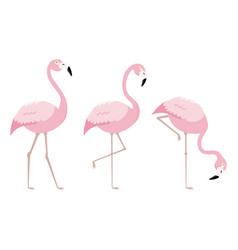 set of flamingo birds vector image