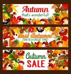 Autumn sale offer banner with fall nature frame vector
